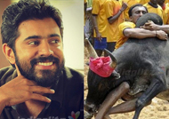 Nivin Pauly lends his support for Jallikattu