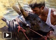 Jallikattu - Santhanathevan Lyric Video