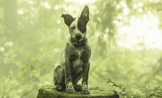 'Urumeen' director's next is a dog adventure film! details