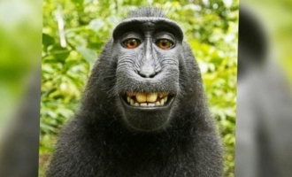 Naruto the monkey loses 'selfie' case in court