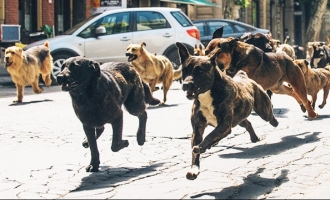 Woman attacked and killed by a pack of seven dogs
