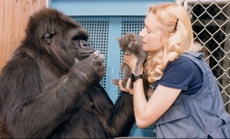 RIP! Koko - The Talking Gorilla passes away