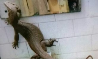 Mega lizard scares the daylights out of hostel girls